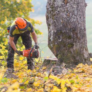 Abholzarbeiten - F hoch 3